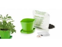 Souprava pro pěstování bylinek SENSE, pažitka